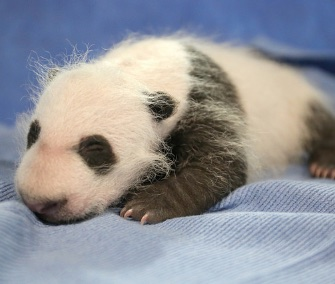 Michelle Obama and Chinese first lady Peng Liyuan named the National Zoo's panda cub Bei Bei.