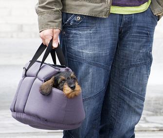 Dachshund puppy in carrier