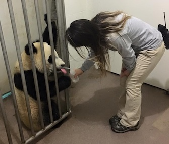 Bei Bei is recovering from lifesaving surgery to remove an obstruction in his intestines.