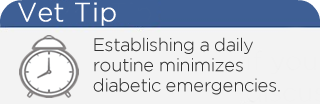 Diabetic Emergency Vet Tip