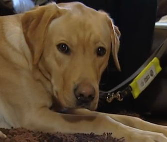 Kaspa has been trained to help his owner with early-stage dementia.