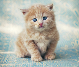 Image result for kitten named Kitty