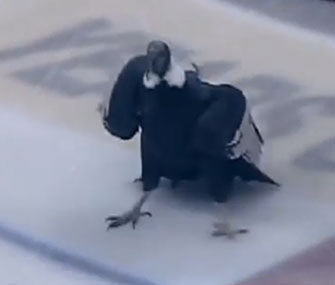 The Bakersfield Condors' mascot took to the ice himself during the National Anthem on Saturday.