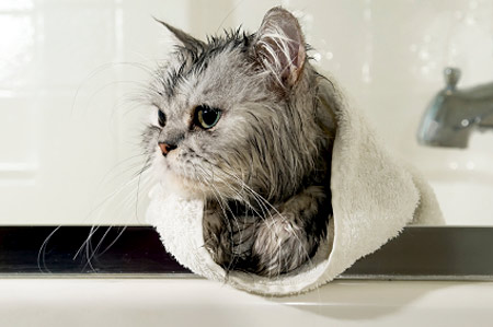 Cat Having Bath