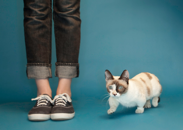 Fizz Girl the World's Shortest Cat