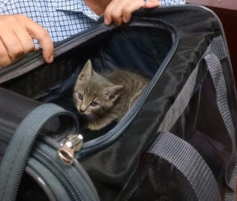 A 6-week-old kitten was adopted by a professor after she survived a 45-minute commute in his SUV's engine.
