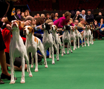 Pointers in the Westminster Ring