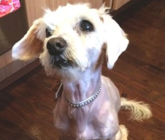 A rescue group in Australia has found a happy home for 12-year-old Prinny.