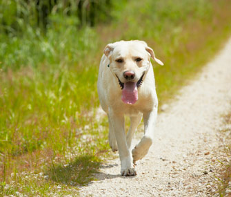 Dog Roaming