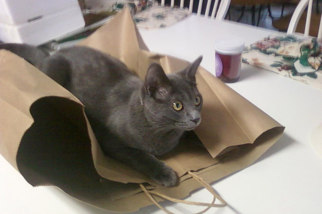 Gray cat Jitterbug lying on a paper bag