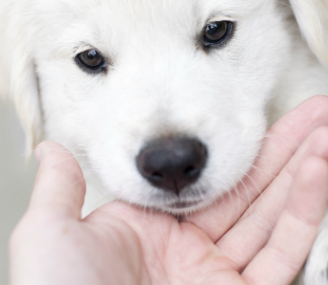 Puppy and hand