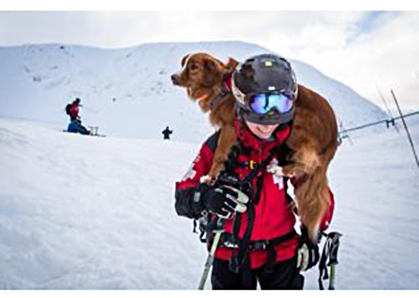 Avalanche search and rescue dog.