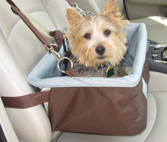 Dog in a car seat