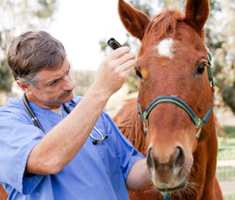 Vet With Horse
