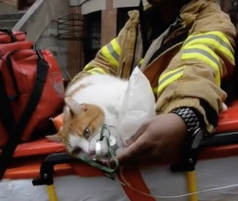 Butterscotch the cat and Sonny the dog were rescued from a fire in their Brooklyn home.