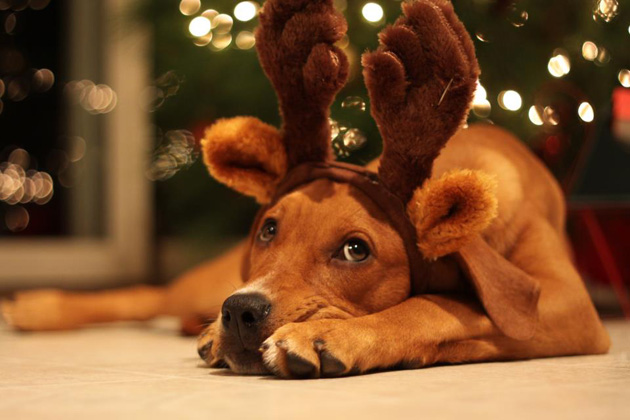 Top 10 Holiday Pet Pics