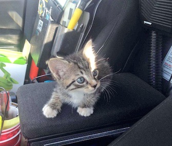An 8-week-old kitten got a ride in a patrol car after he was rescued from a storm drain in Florida.