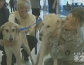 Soldiers reunited with dogs from Afghanistan
