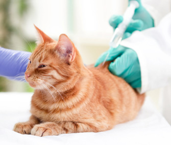 Management of diabetic cats with long-acting insulin