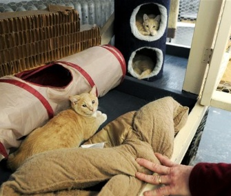 A family of kittens are being cared for at the Great Meadow Correctional Facility in New York.