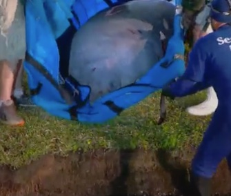 A group of 19 manatees who took a wrong turn were rescued from a tight storm drain in Florida.