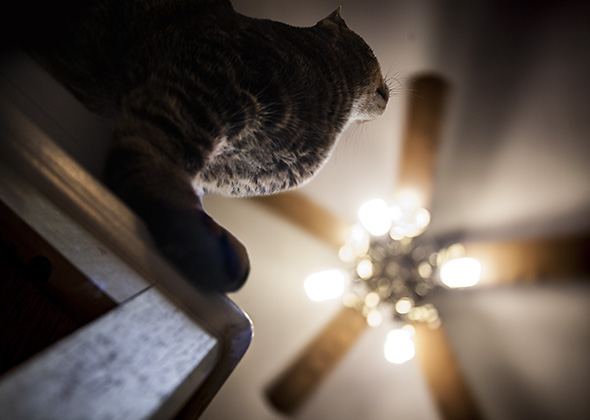 Things in the Home That Scare Pets Ceiling Fan