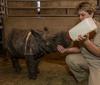 Mili the baby rhino gets a bottle.