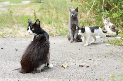Ferrel cats
