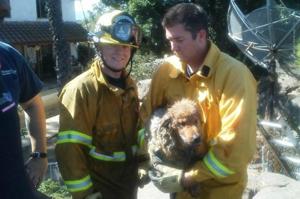 Dog rescued by Alpine Firefighters