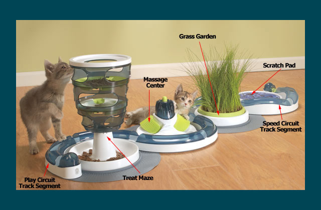Kitty Activity Center