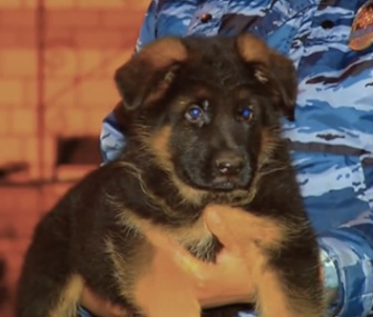 "Russia says it plans to send an Alsatian puppy to France as a ""sign of solidarity"" in the fight against ISIS."