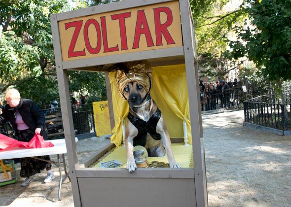 Dog Halloween Parade Zoltar