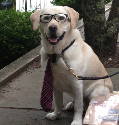 Lab Wearing Suit and Glasses