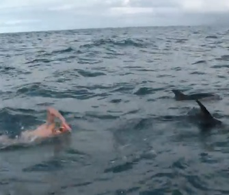 A pod of 10 dolphins came to the aid of Adam Walker, a long-distance swimmer, in New Zealand.