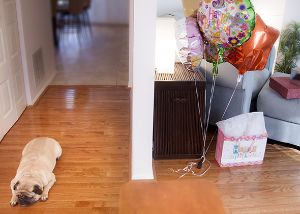 Things in the Home That Scare Pets Balloons