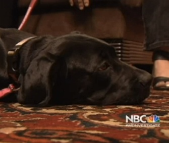 A puppy nicknamed Richard Parker was saved from the San Francisco Bay.
