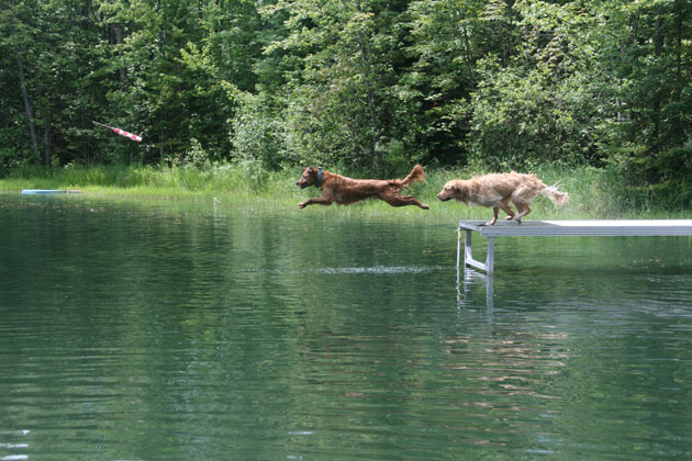 Dog Scouts Dock Dogs
