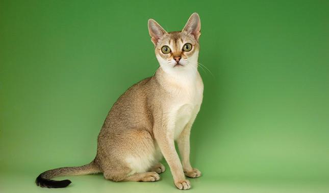 cats san francisco