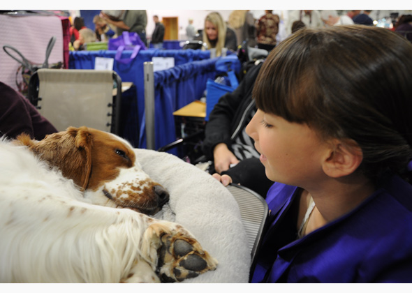 Megan and Ginger at National Dog Show