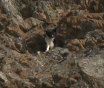 Skunk was found barking on a 150-foot cliff in Alaska.