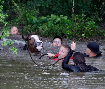 Justin Nelzen, wearing a red vest, joins others to rescue up to 70 horses along Cypresswood Drive in Houston.