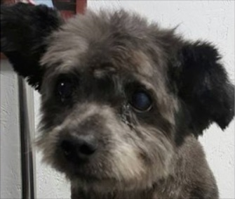 Chester the dog made headlines when he was adopted during his dying days.