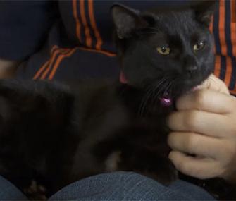 Muffin was rescued when Bradley McCallum heard her meowing.