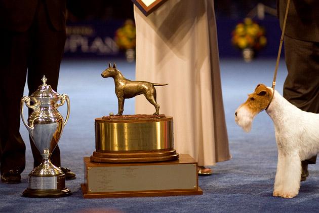 Eira Wire Fox Terrier Best in Show