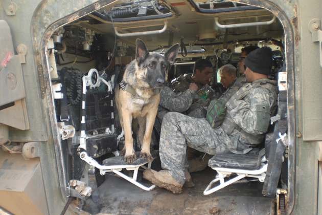 Not All Dogs Can Be Military Dogs