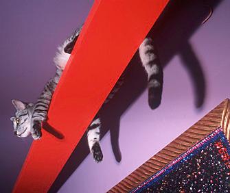 Cat on colorful shelf