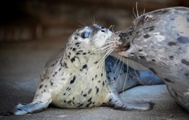 Harbor Seal Baby Boom at Washington Zoo