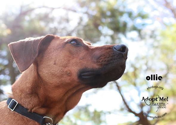 adoptable dog