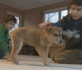 Olaf the puppy is now warm in a foster home after being found frozen in rural Alaska.