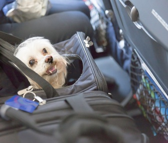 Dogs who fly in the cabin of a plane are required to be in a carrier that fits under the seat in front of their owner.